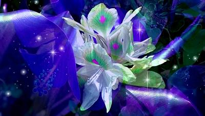 Fleur bleue abstraite (sans reflet)