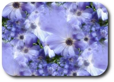 fleursbleues1.jpg
